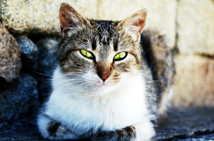 cat-174526_1280